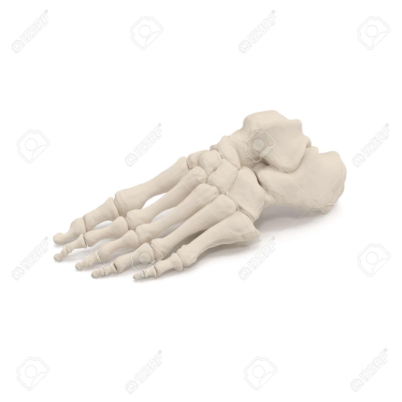 Atemberaubend Beinskelett Ideen - Anatomie Und Physiologie Knochen ...