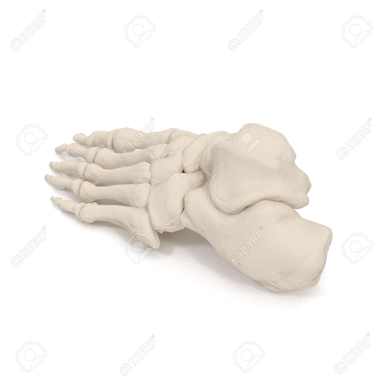 Menschliche Bein-Skelett-Knochen Auf Weiß. 3D-Darstellung ...