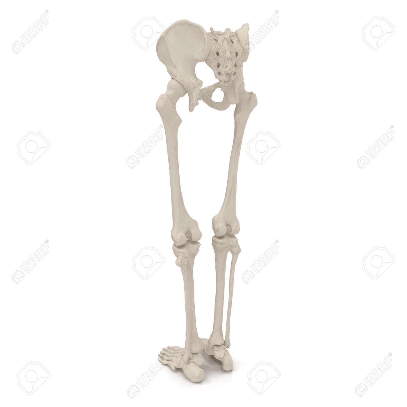 Ziemlich Körperskelett Zeitgenössisch - Menschliche Anatomie Bilder ...