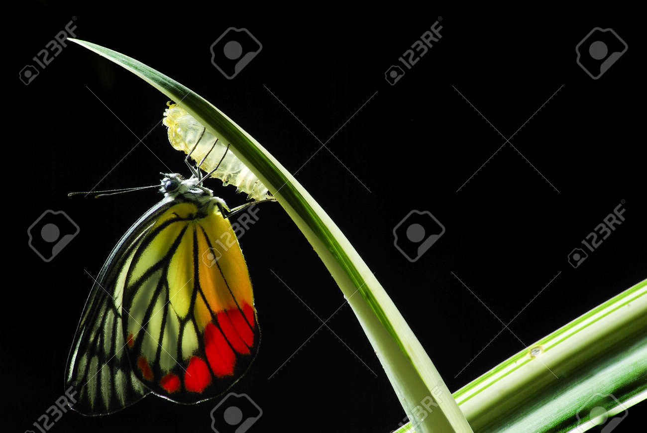 Monarch Butterfly, Milkweed Mania, baby born in the nature - 15161234