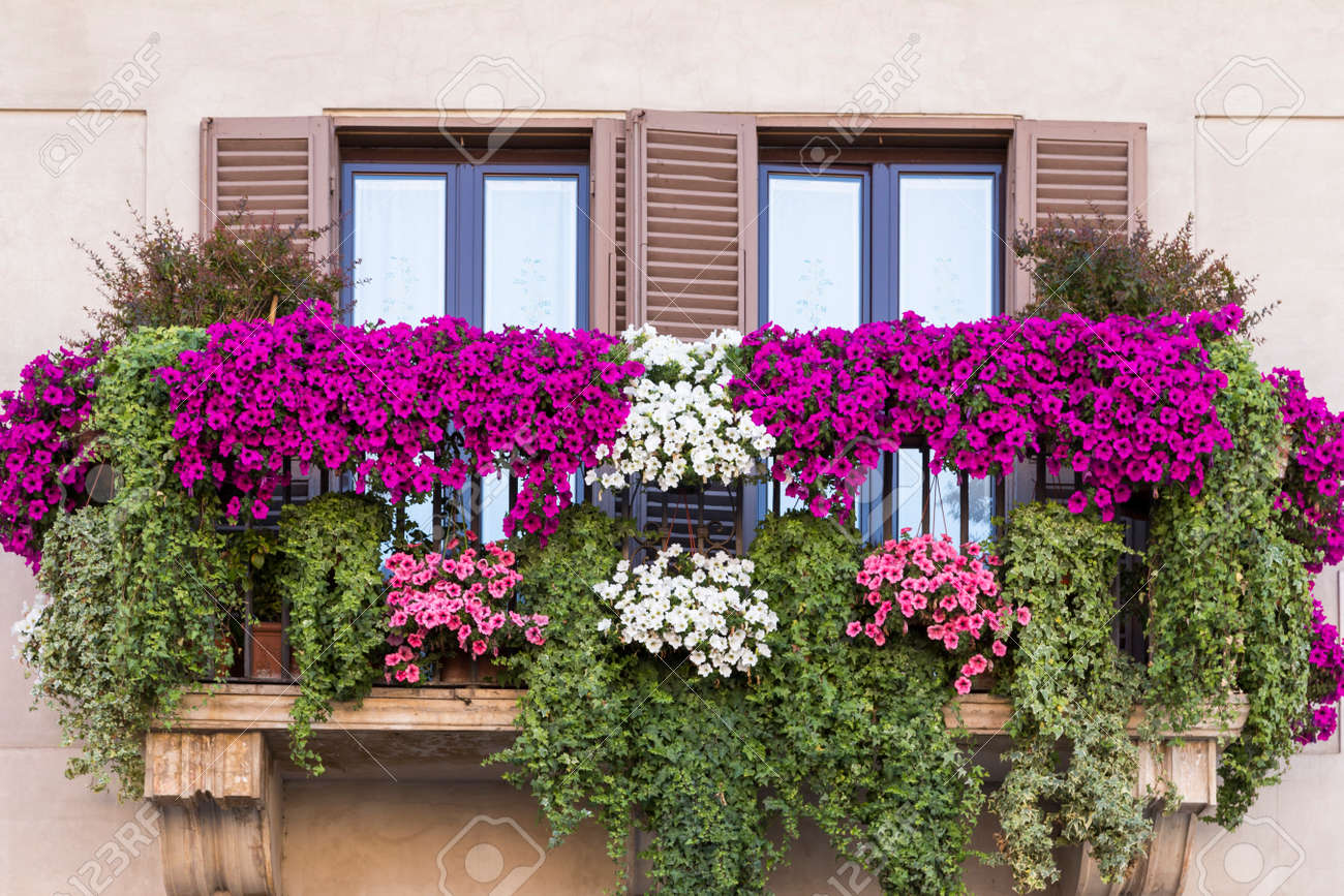 Violet Floral Pot On Balcony Rome. Italy Stock Photo, Picture And Royalty Free Image. Image 32173399.