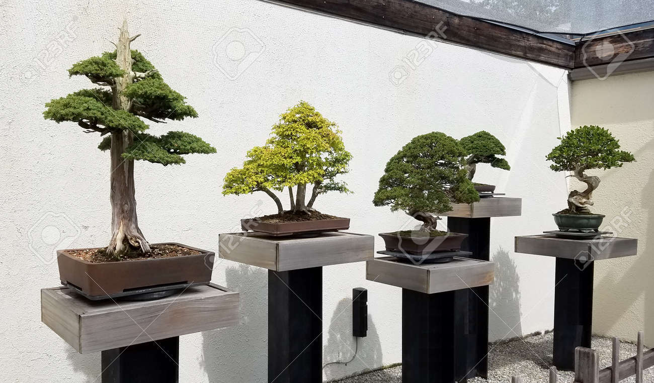 Bonsai And Penjing Exhibit With Miniature Trees In Trays Stock Photo Picture And Royalty Free Image Image 65037182