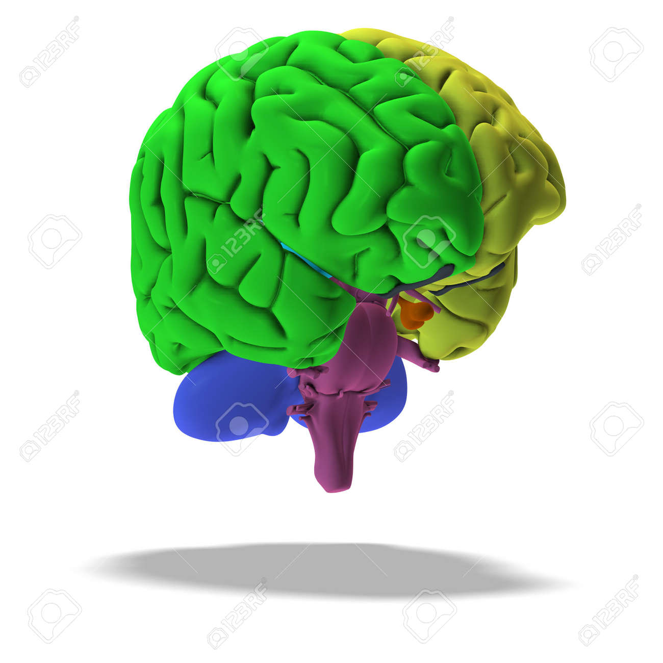 schematic illustration of a human brain with clipping Stock Illustration - 5006861