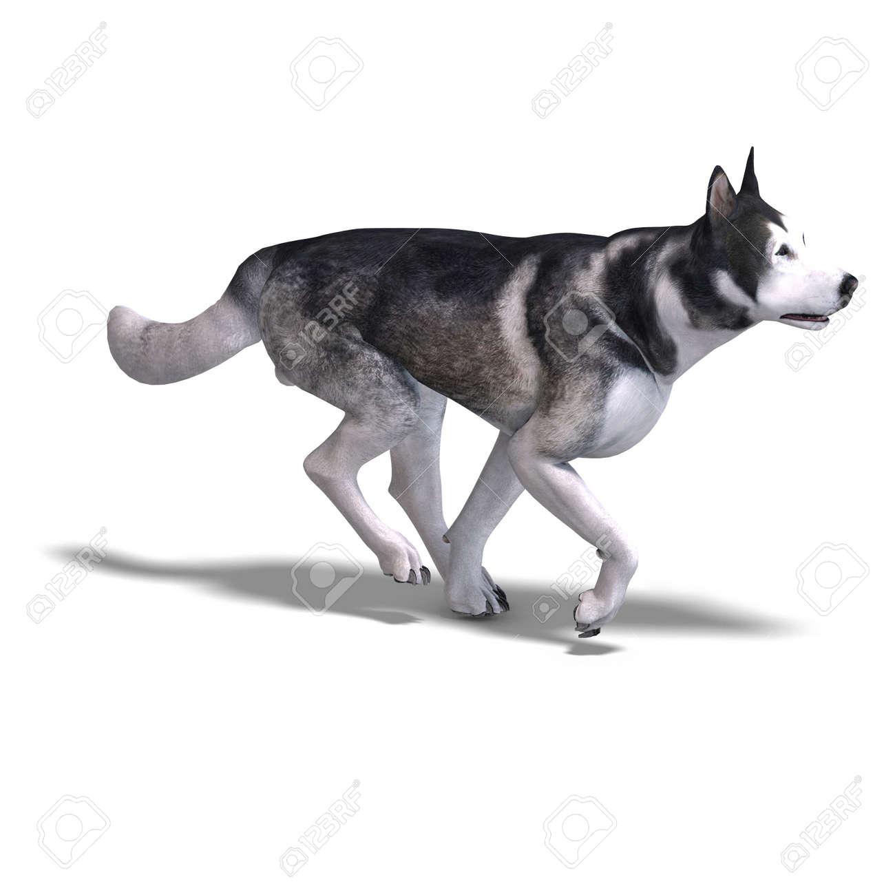 Alaskan Malamute Dog  3D rendering