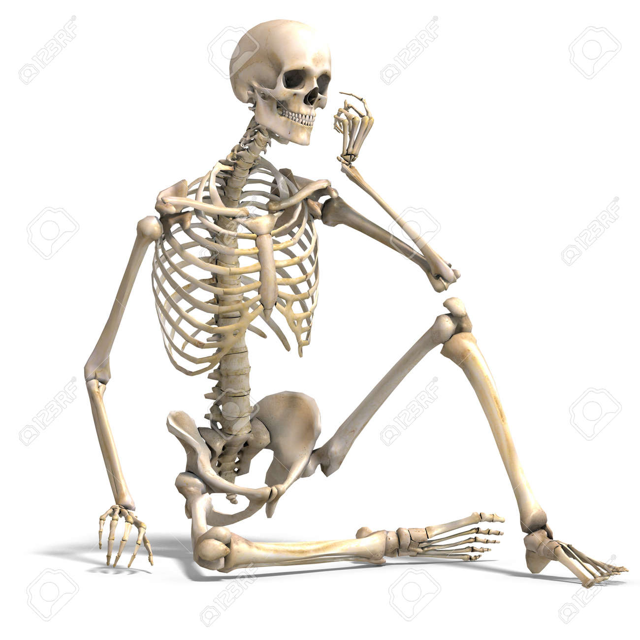 Anatomical Correct Male Skeleton Stock Photo, Picture And Royalty ...