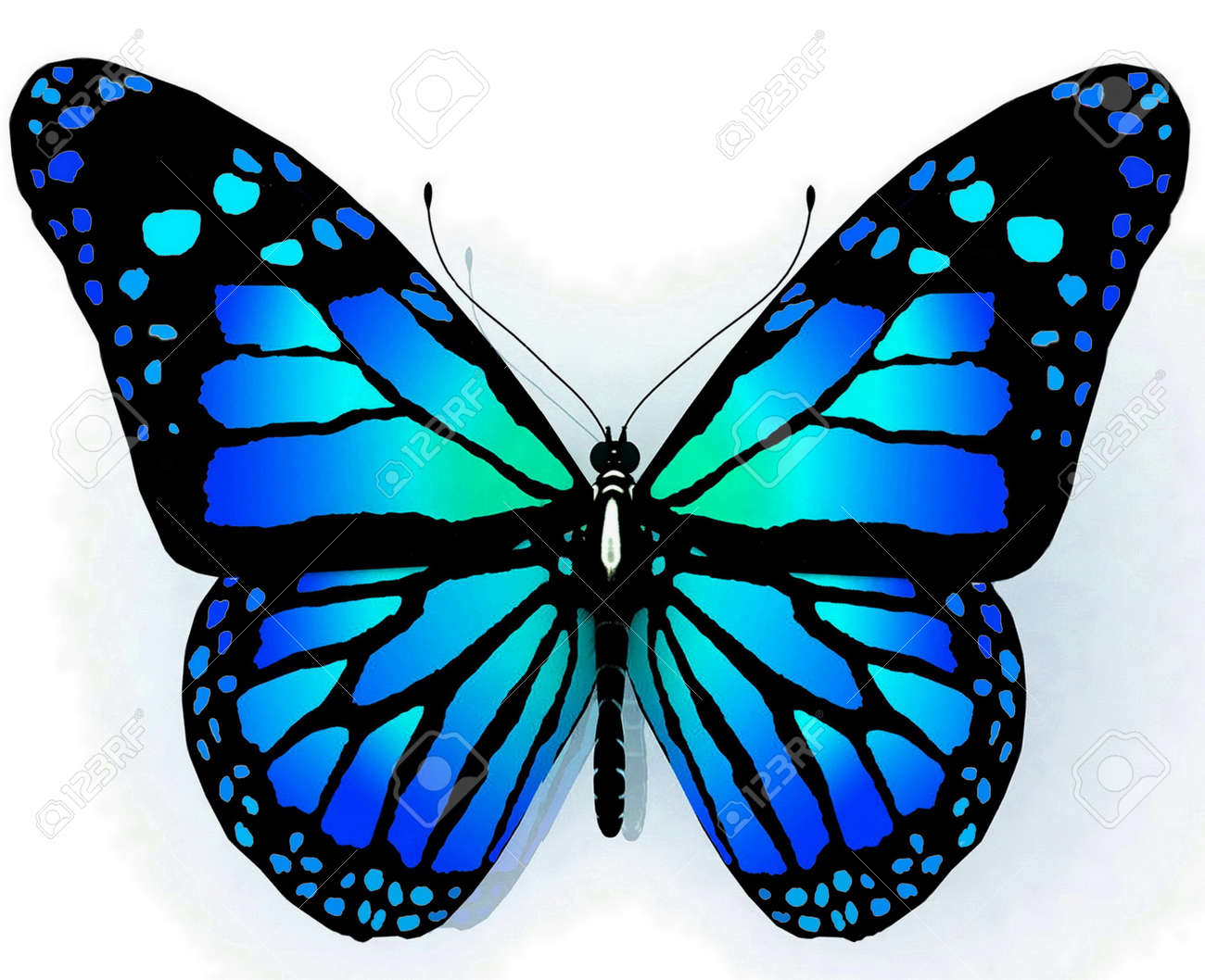 12406149-ge%C3%AFsoleerde-vlinder-van-blauwe-kleur-op-een-witte-achtergrond.jpg