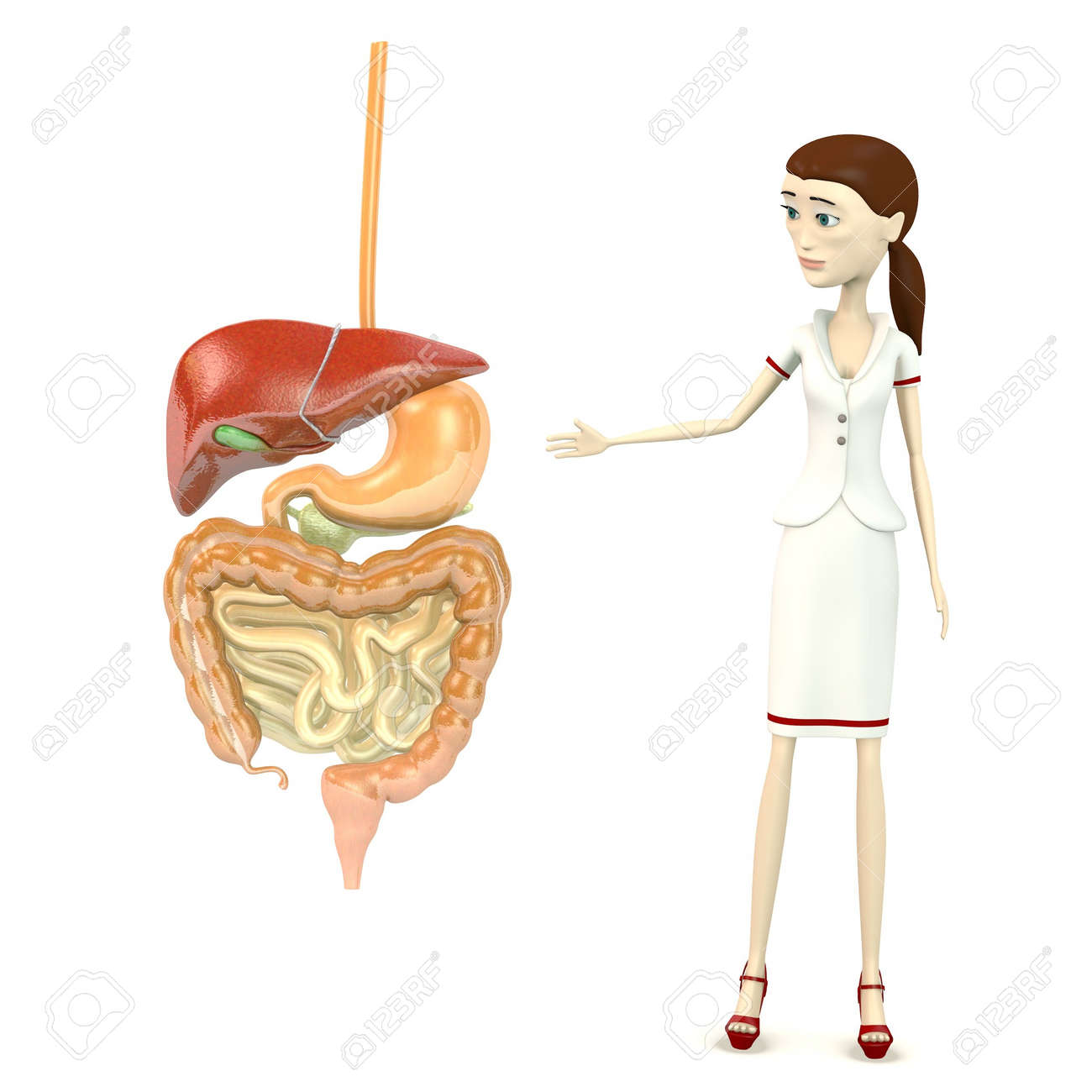 3d render of cartoon character with digestive system Stock Photo - 18949449