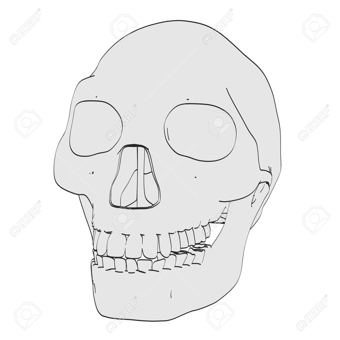 Cartoon Image Of Homo Erectus Skull Stock Photo Picture And Royalty