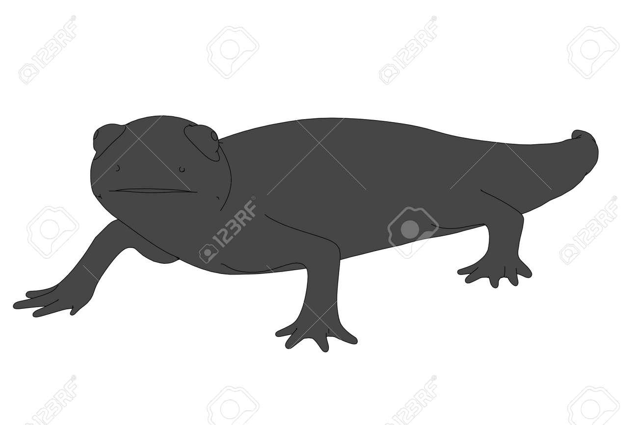 Dessin Salamandre image de dessin animé 2d de la salamandre banque d'images et photos