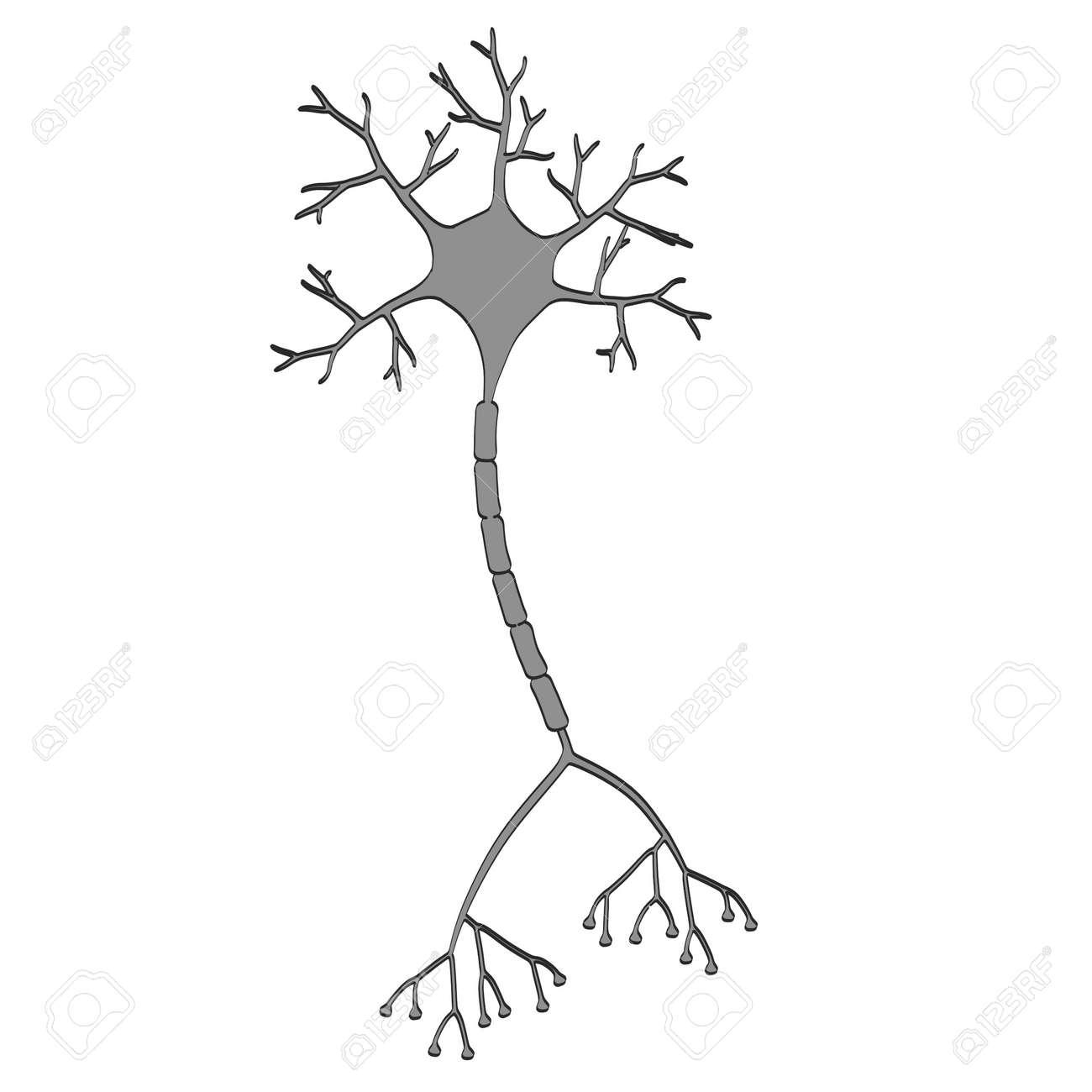 2d cartoon illustration of brain neuron stock photo picture and rh 123rf com neuron action potential explained neuron action potential diagram