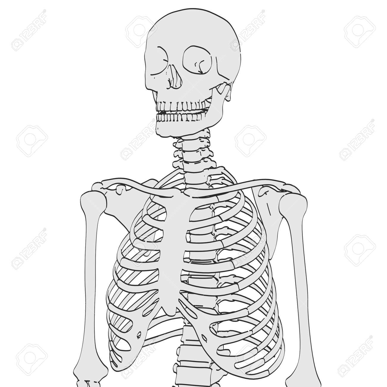 2d Cartoon Illustration Of Human Skeleton Stock Photo Picture And