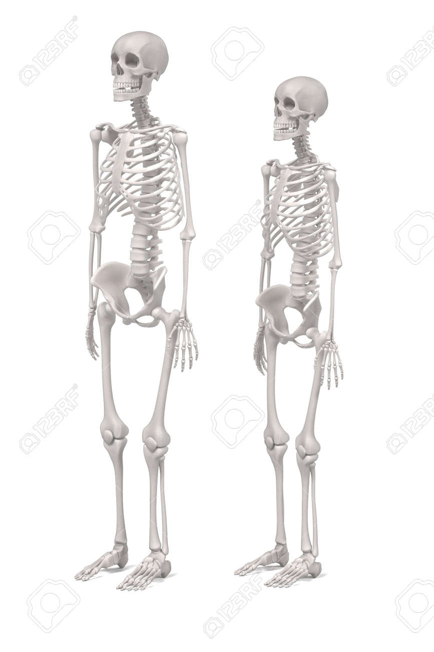 3d Renderings Of Human Skeletons Stock Photo Picture And Royalty