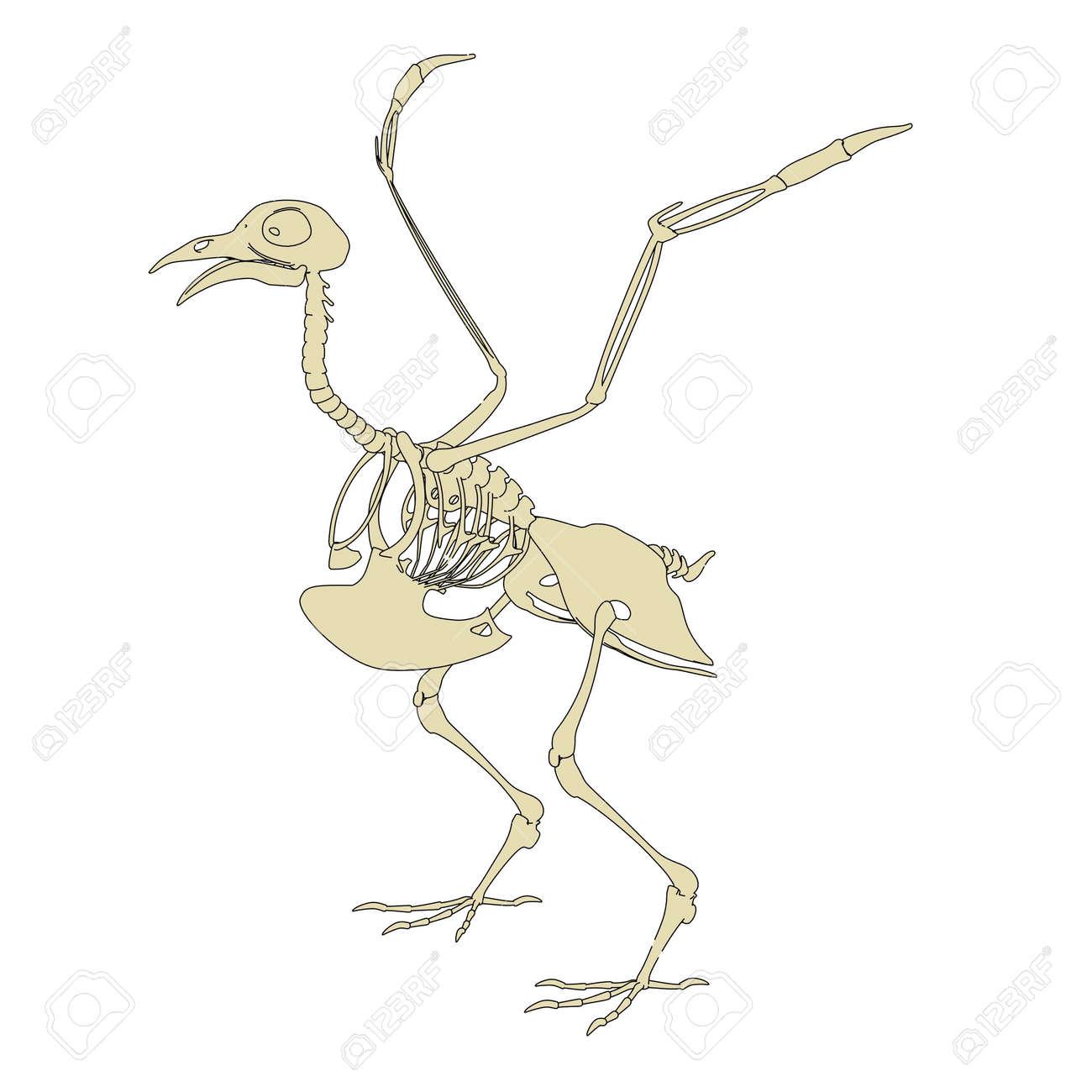 2d Ilustración De Dibujos Animados Del Esqueleto De La Paloma Fotos ...