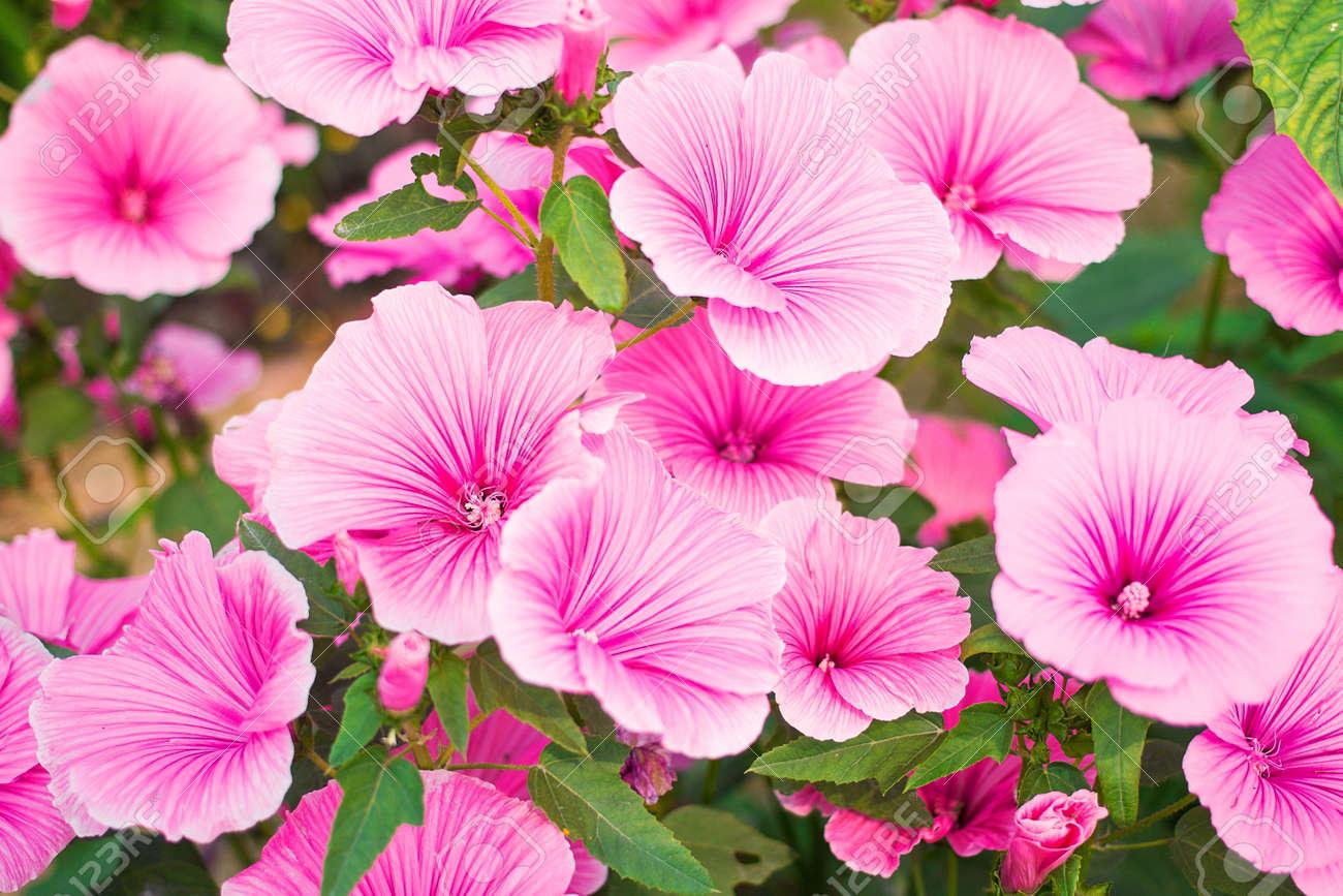 Hermosas Flores De Jardin Los Nombres Comunes De Las Especies De