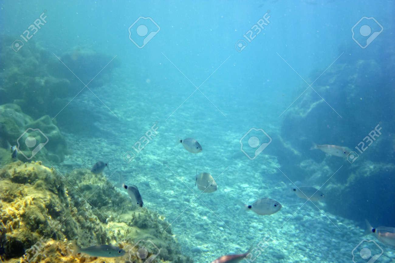 Sous-marine Banque d'images - 11284962