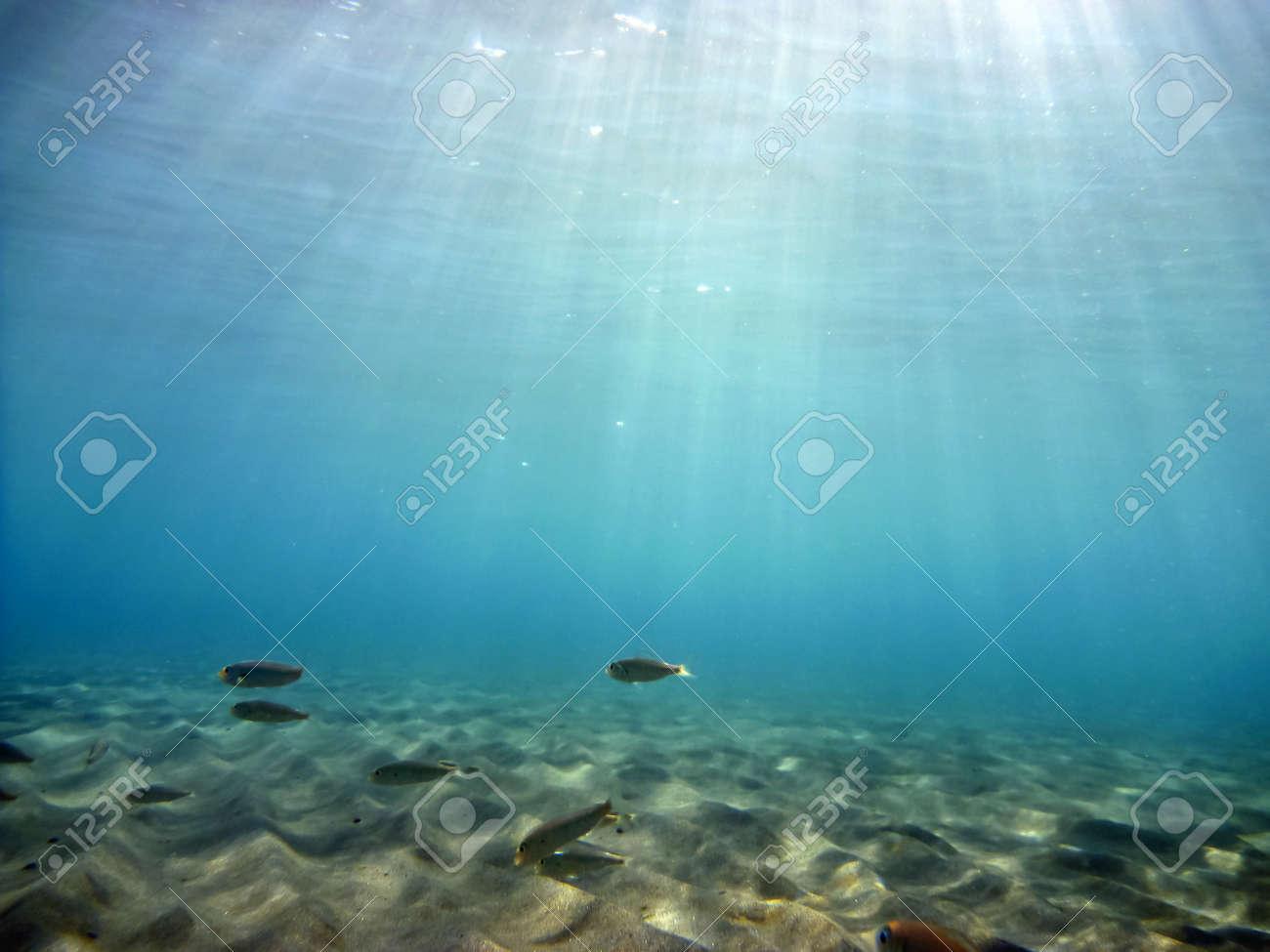 Sous-marine Banque d'images - 11483860