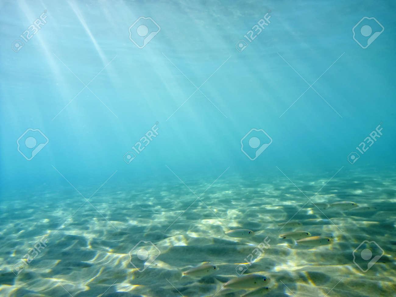 Underwater - 11483870