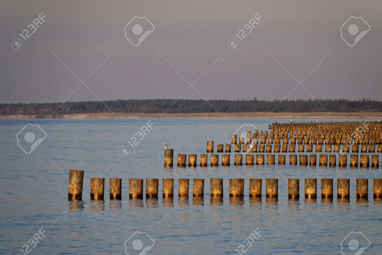 Coast of Ahrenshoop, Germany in the evening Stock Photo - 15810819