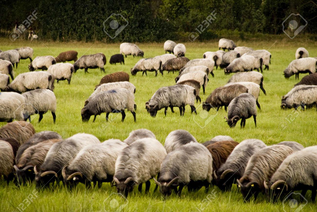 Luneburg Heath, Germany Stock Photo - 16121060