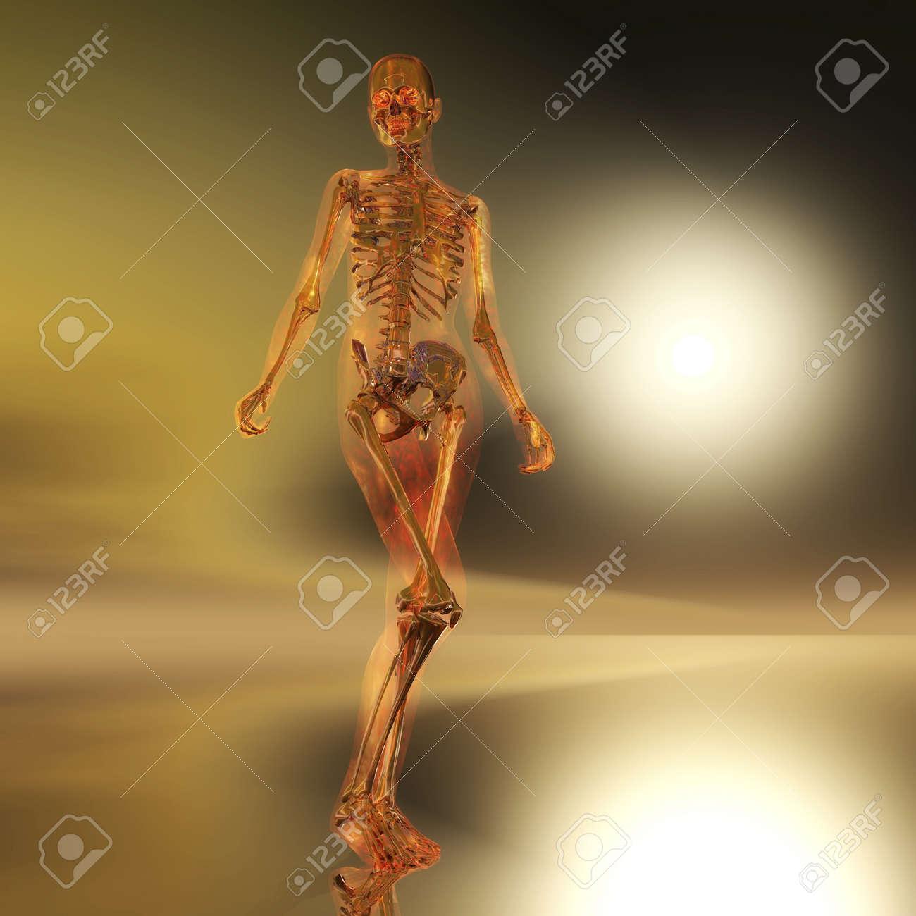 Digital Illustration of a Skeleton Stock Illustration - 21256471