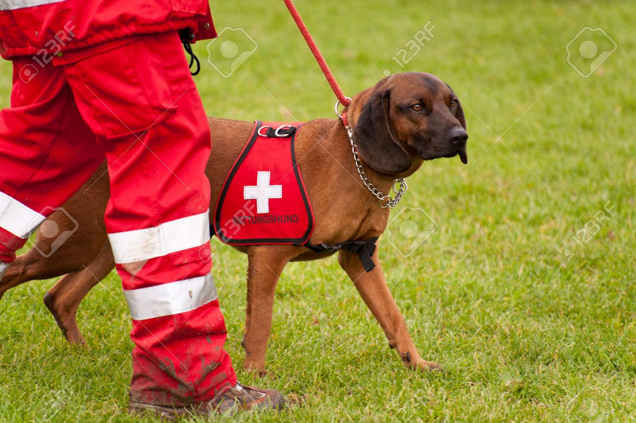 Formation d'un chien de sauvetage Escadron Banque d'images - 38070577