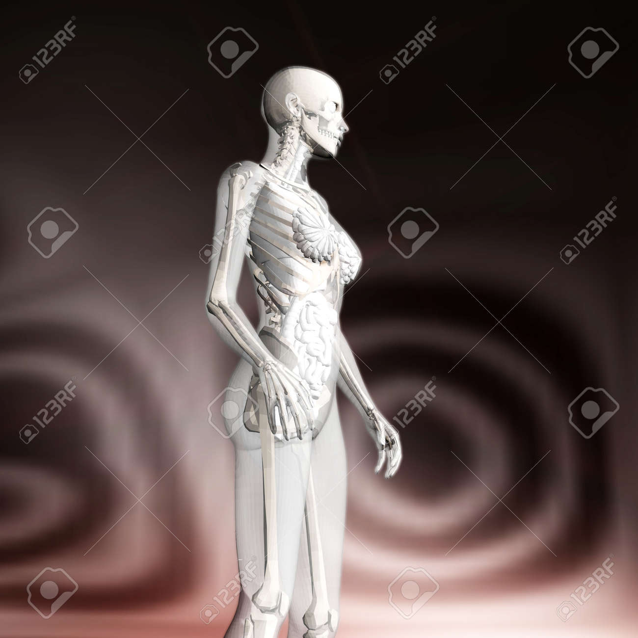 Digital 3D Rendering Of The Female Human Anatomy Stock Photo ...