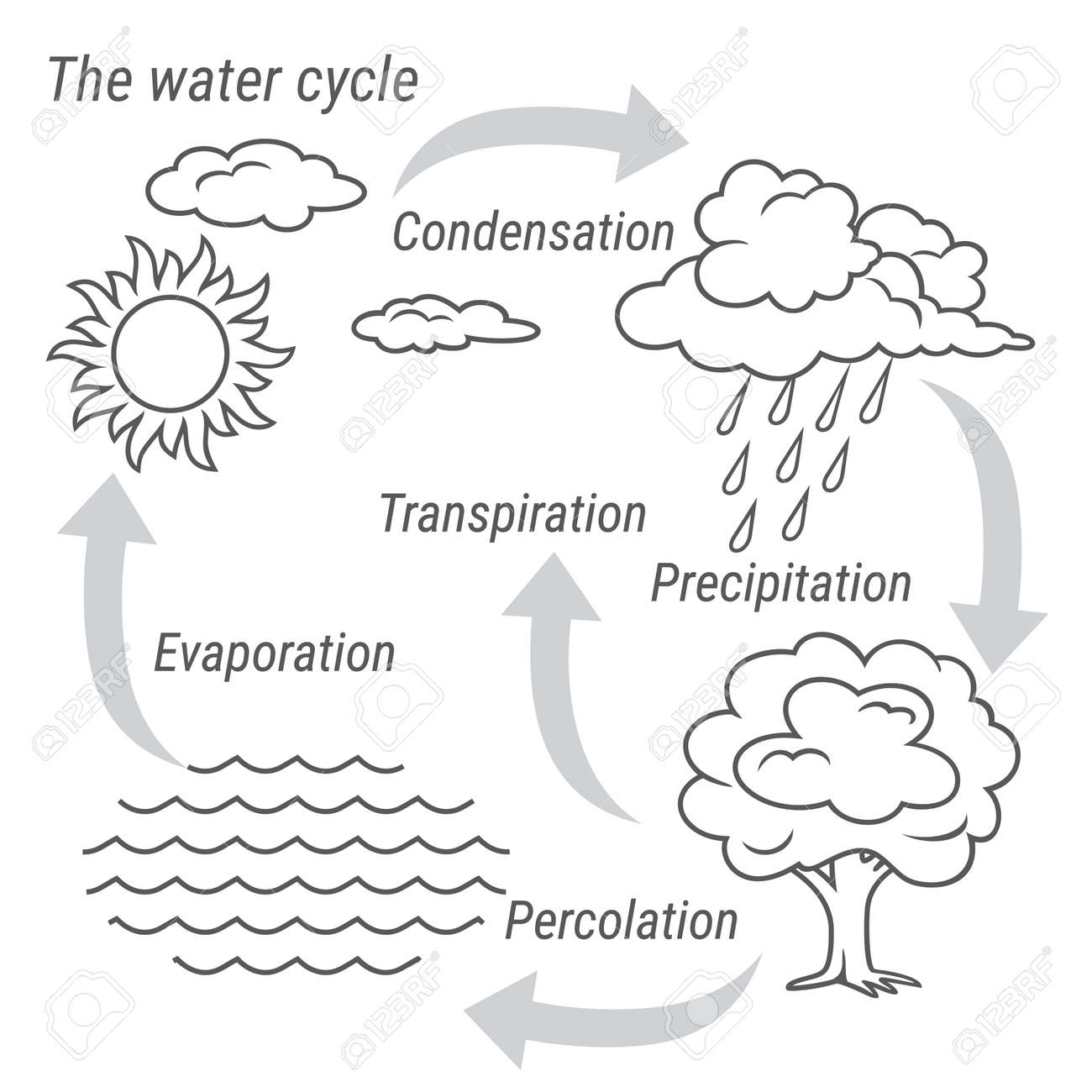 Vector schematic representation of the water cycle in nature vector vector schematic representation of the water cycle in nature illustration of diagram water cycle cycle water in nature environment ccuart Image collections