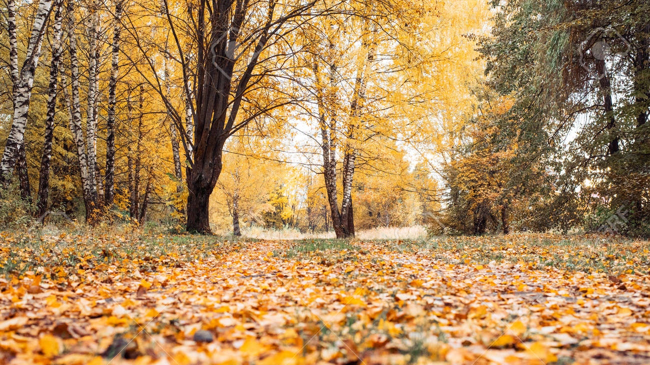 Autumn Forest Beautiful Background Park Bright Leaves Road