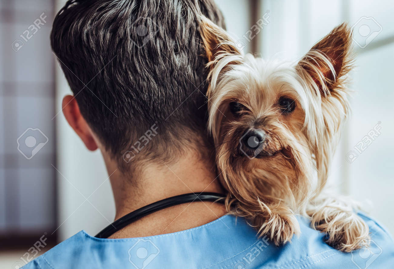 Handsome male doctor veterinarian at clinic with little dog Yorkshire Terrier. - 90539477