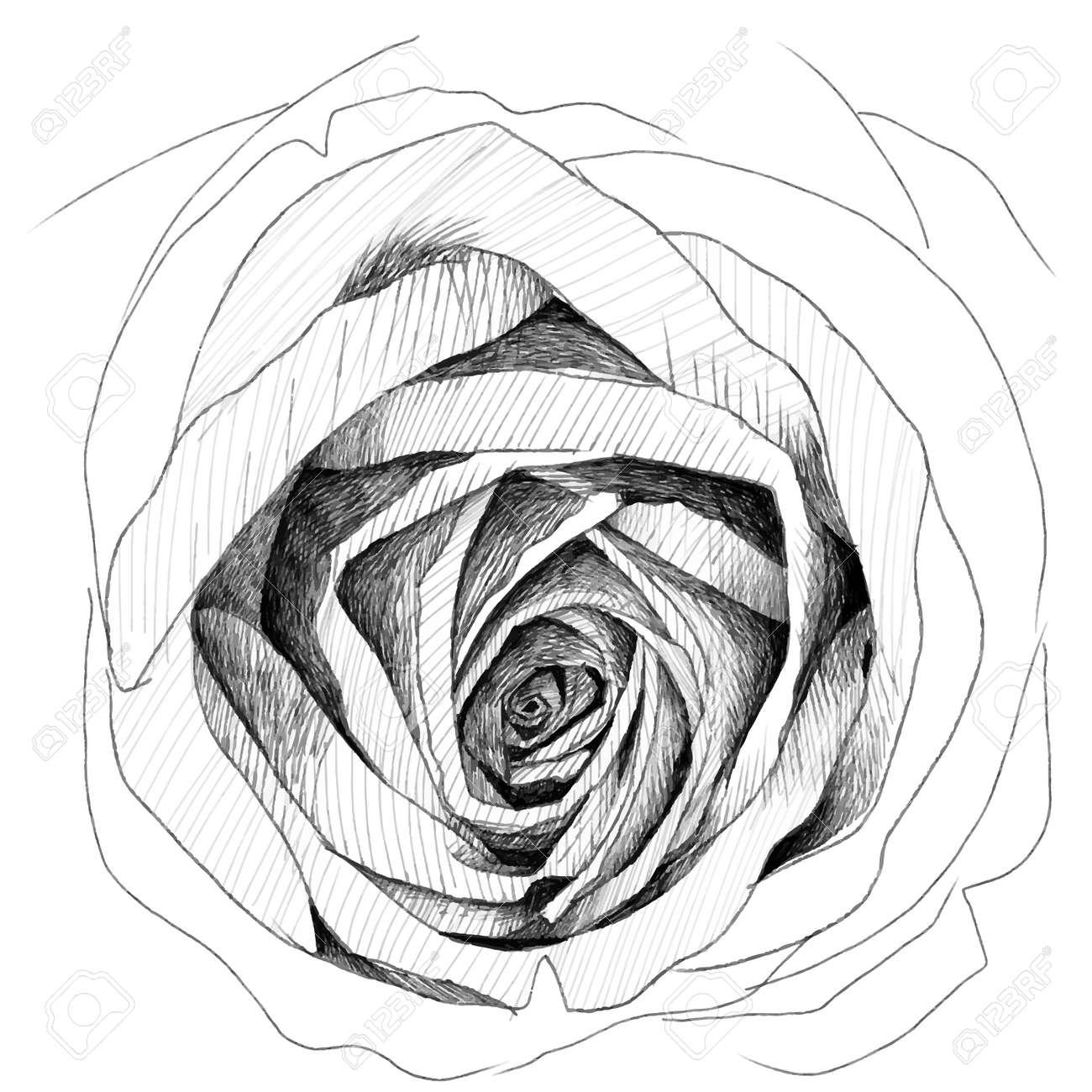 Rose   pencil sketchbook Stock Vector - 22031952