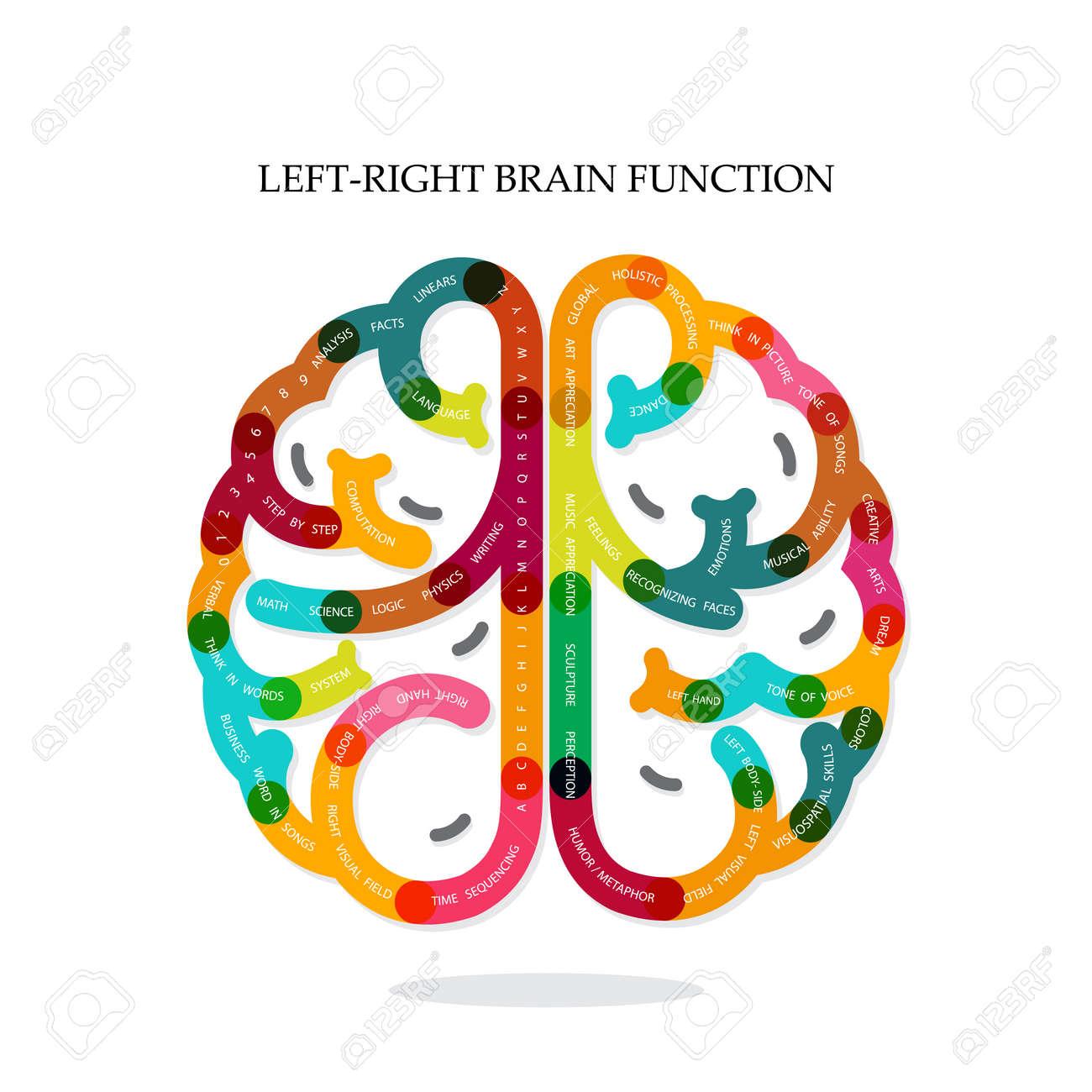 Kreative Infografiken Linke Und Rechte Gehirnfunktion Ideen Auf ...