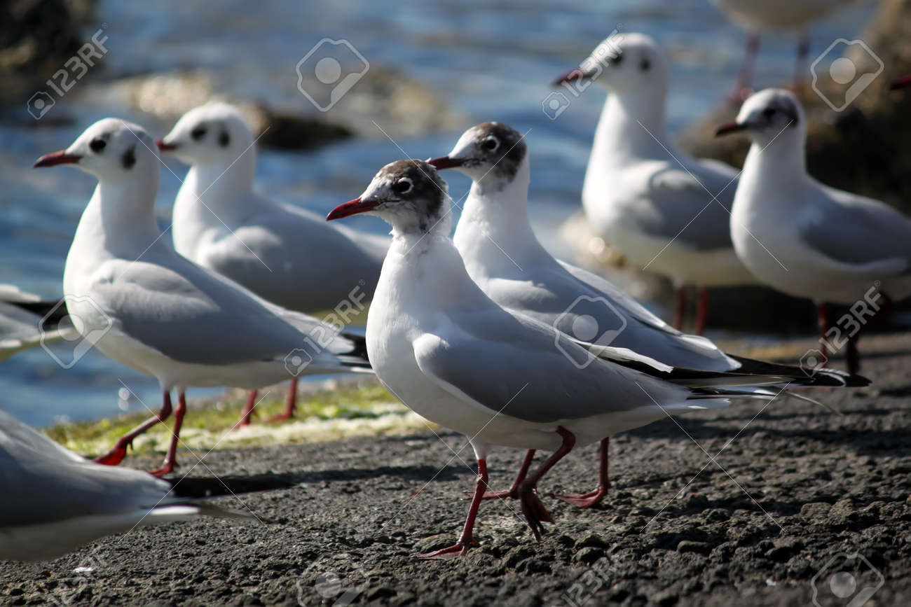 Photo of seagulls Stock Photo - 14983567