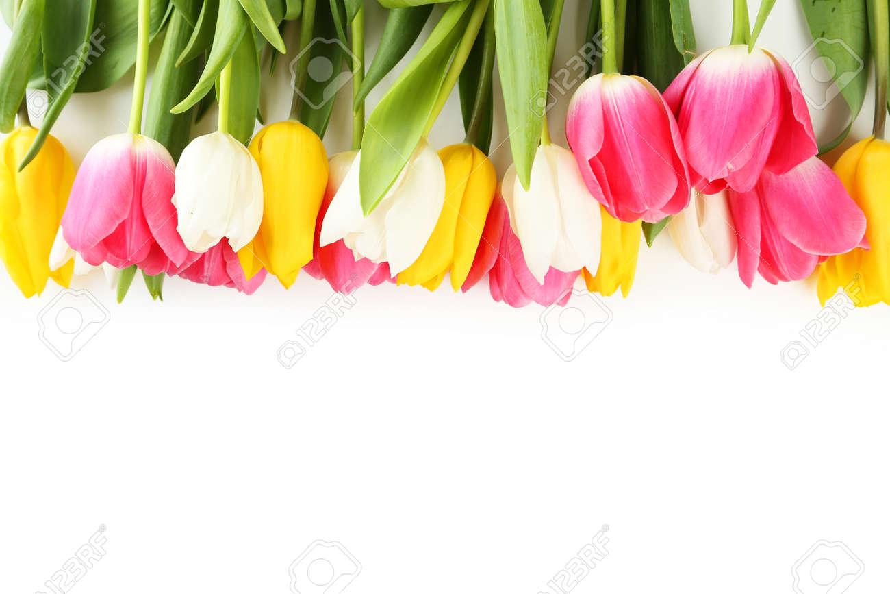 Tulips on white background - 43016609