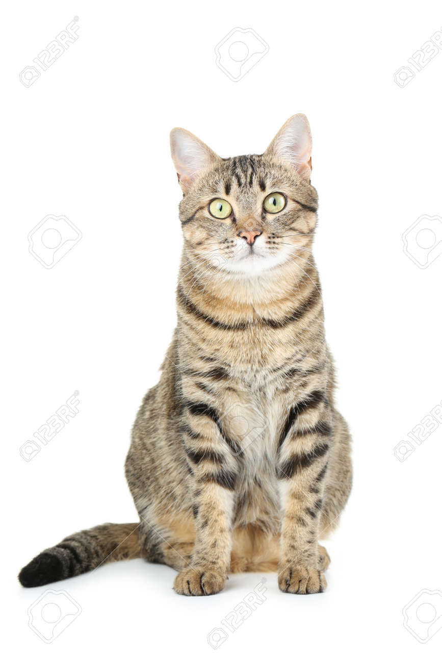 Beautiful cat isolated on a white - 43739131