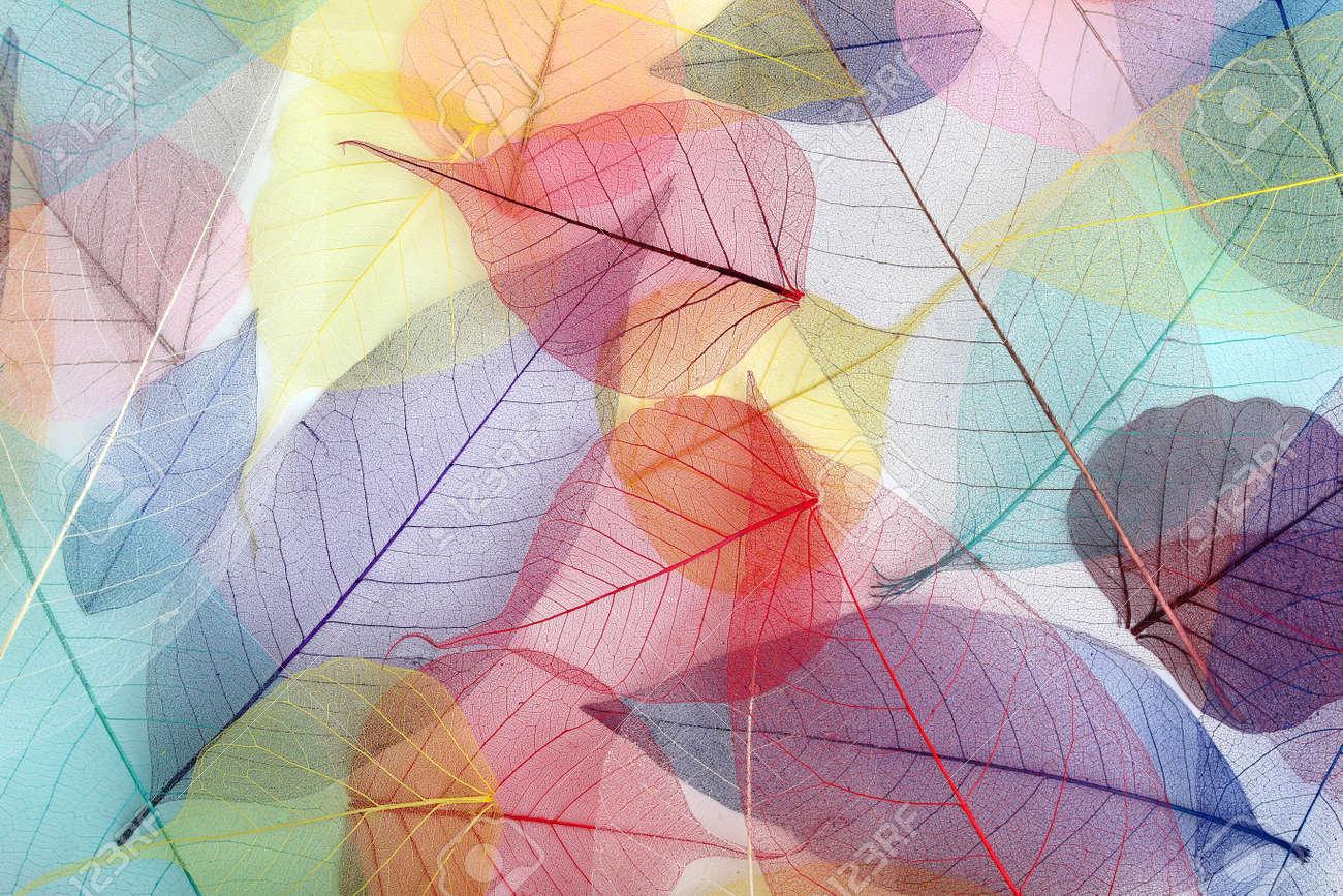 Skeleton leafs background, close up - 46534579