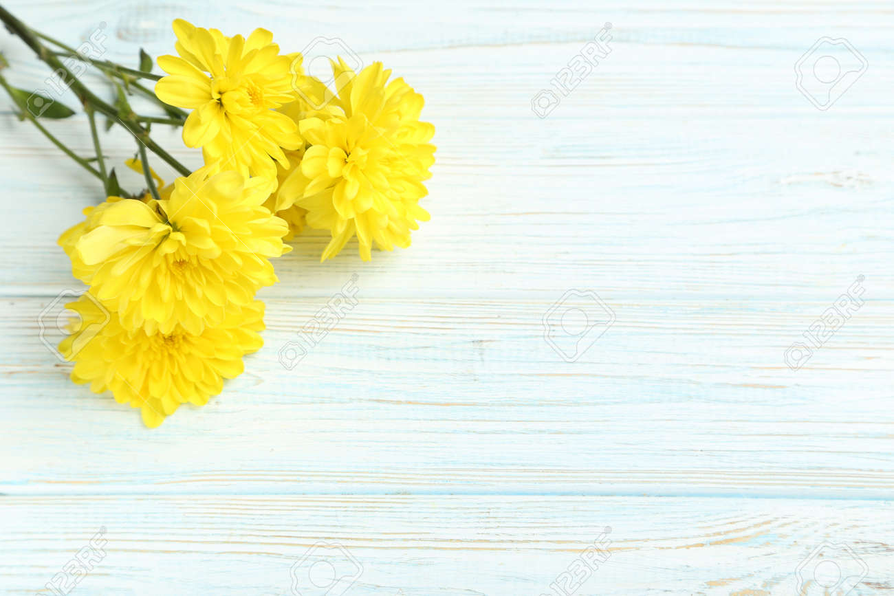 Yellow chrysanthemum flowers on a white wooden table - 54163487