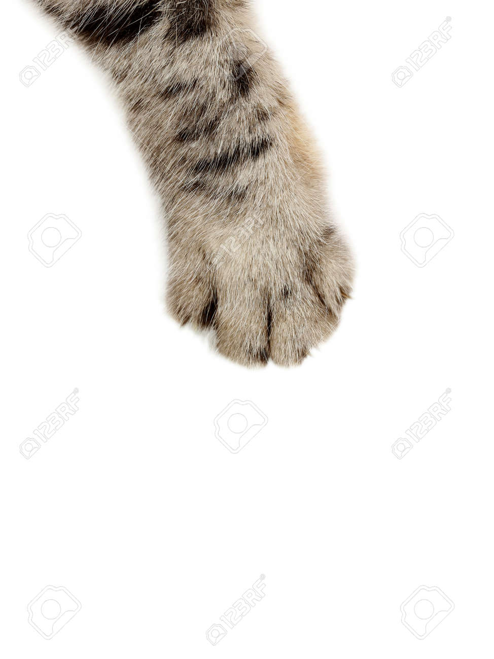 Cat paw on the white background - 55343019