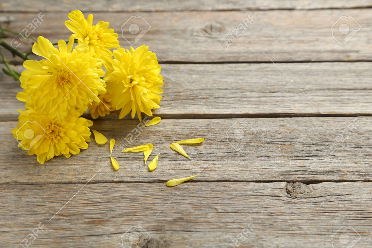 Yellow Chrysanthemum Flowers On A Grey Wooden Table Stock Photo