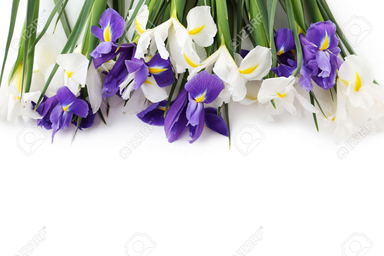 Bouquet of iris flowers isolated on a white stock photo picture and bouquet of iris flowers isolated on a white stock photo 74163322 izmirmasajfo