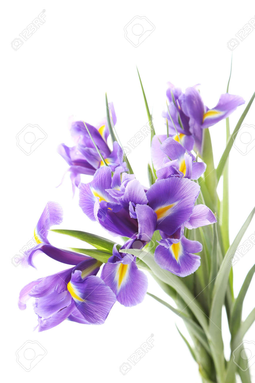 Bouquet Of Iris Flowers Isolated On A White Stock Photo Picture And