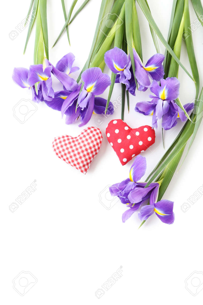Bouquet of iris flowers on white background stock photo picture and bouquet of iris flowers on white background stock photo 76059359 izmirmasajfo Image collections