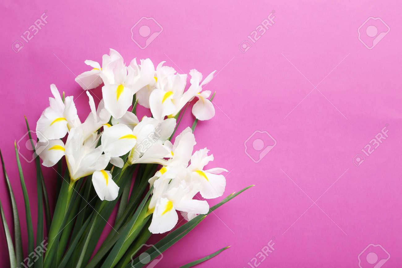 White iris flowers on pink background stock photo picture and stock photo white iris flowers on pink background izmirmasajfo