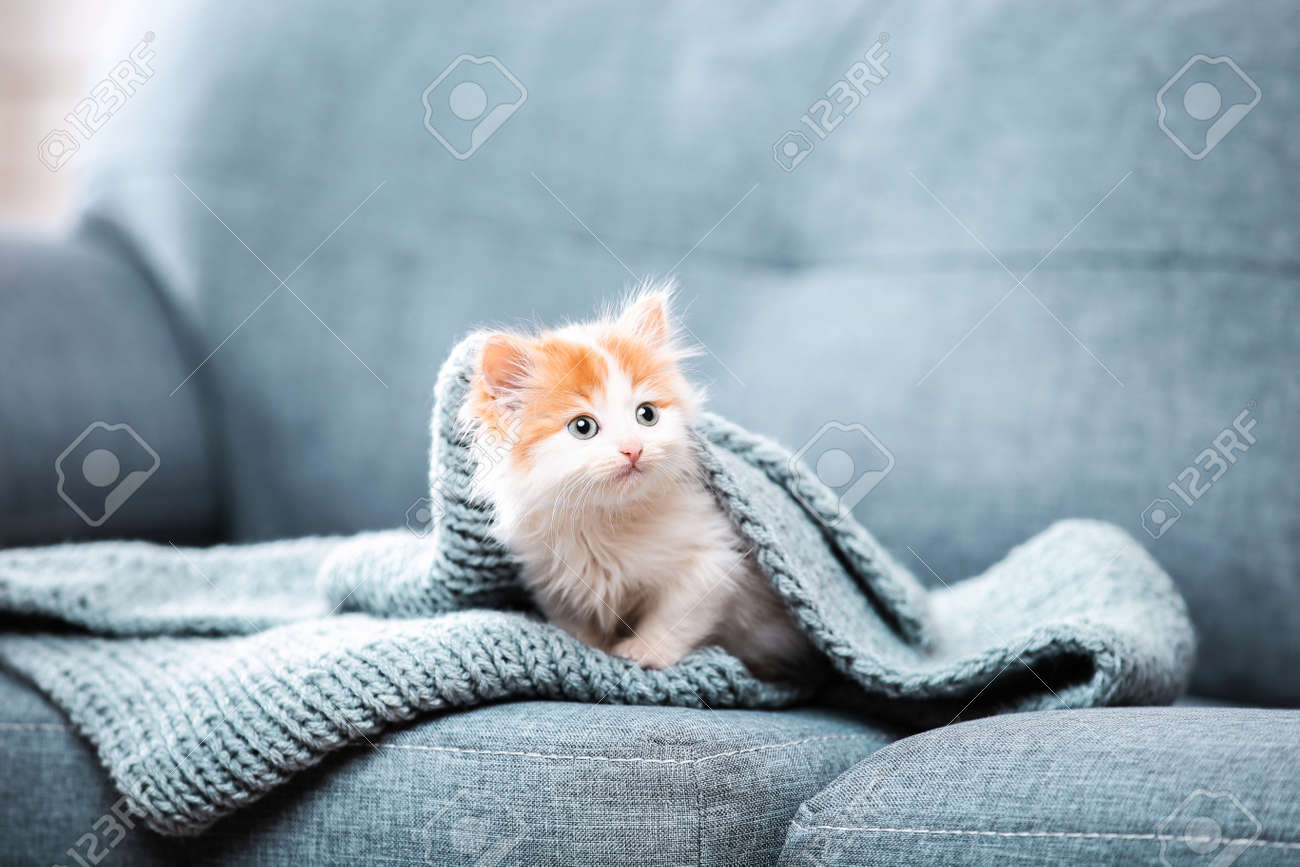 Cute kitten with scarf sitting on grey sofa - 116600330