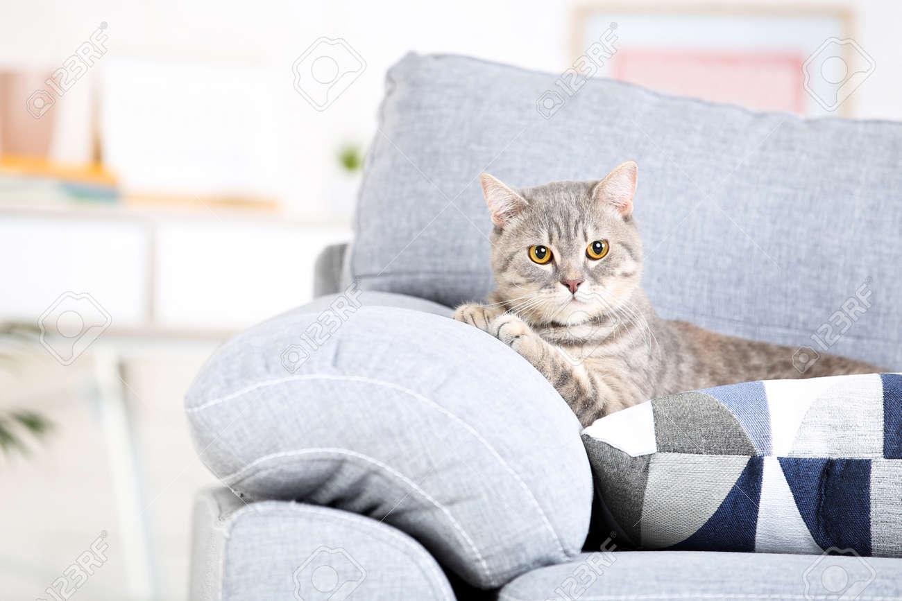 Beautiful cat lying on grey sofa - 128383196