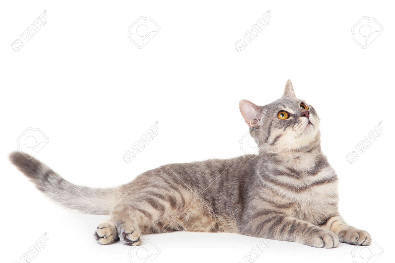 Beautiful cat lying on white background - 129975989