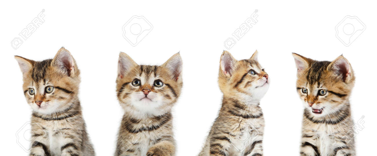 Collage of cute kitten on white background - 152831027