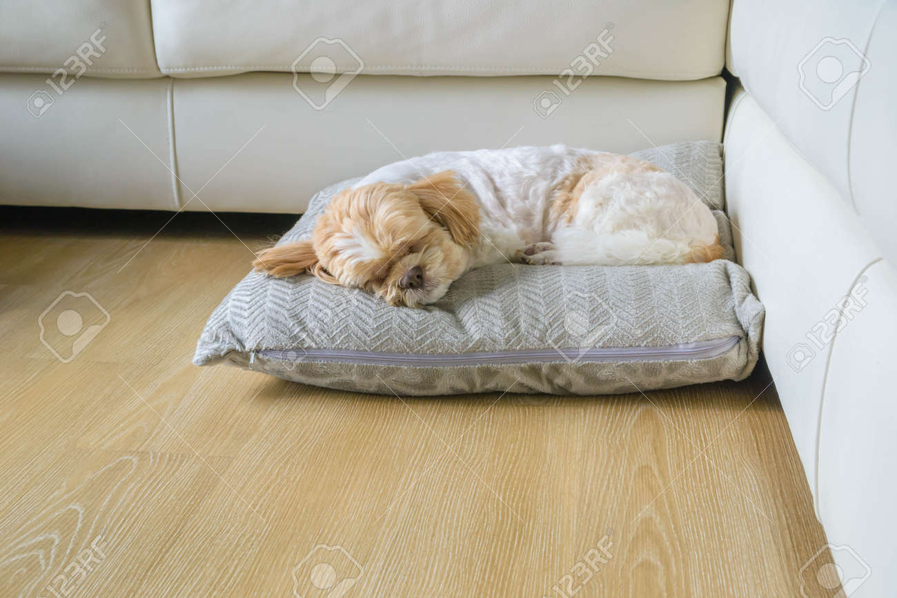 Dog Sleeping Comfortably On Big Soft Pillow In The Living Room – Sleeping in the Living Room