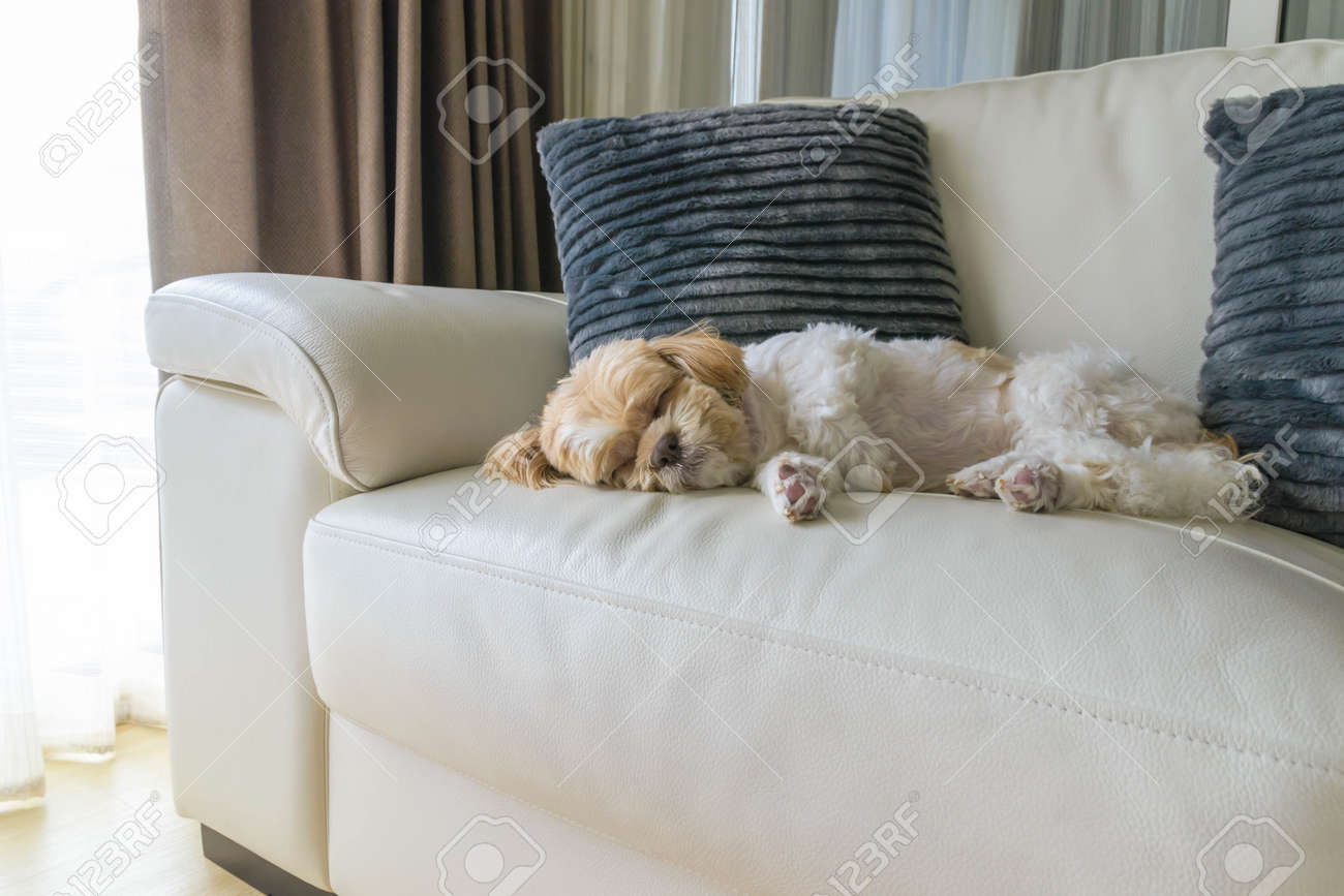 young dog sleeping on modern sofa in the living room