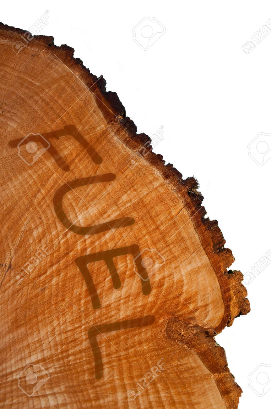 Cross section of tree trunk with word Stock Photo - 10654240