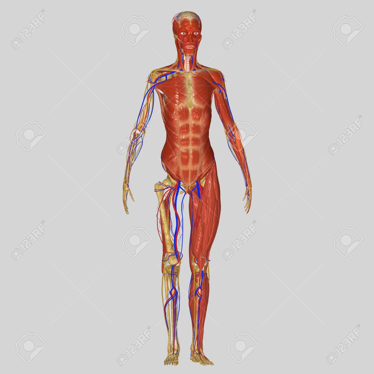 Atractivo Anatomía Y La Fisiología De Audio Libre Bosquejo ...